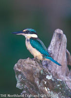 Photo Kingfisher