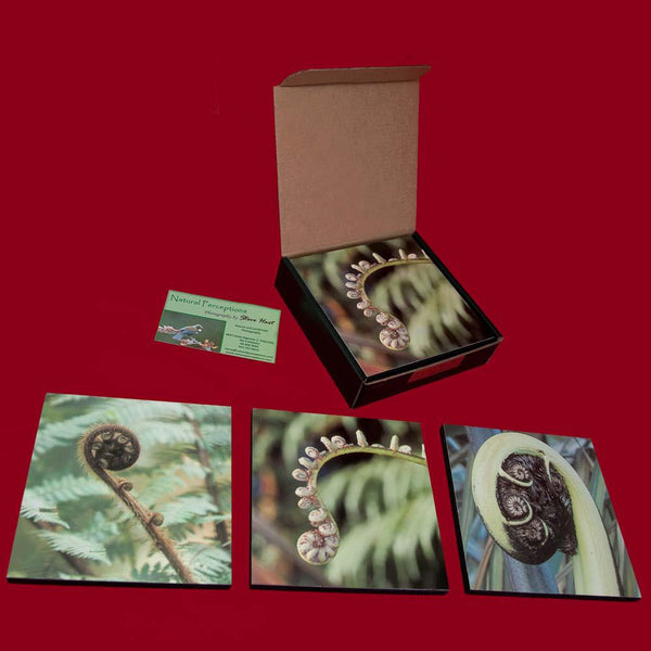 Photo Koru, Set of Three