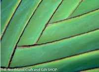 Photo Natures pattern palm 2