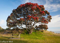 Photo Pohutakawa Tree