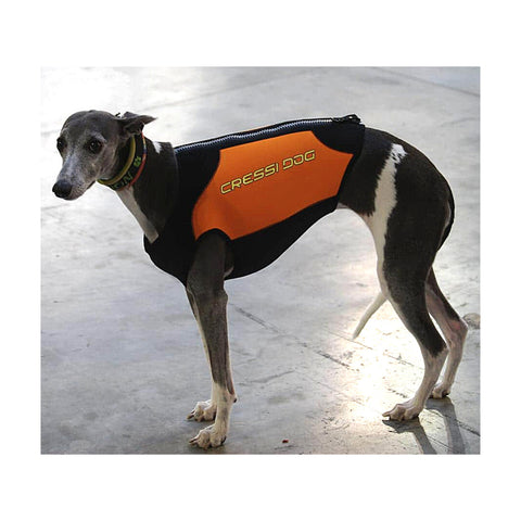Dogs Wetsuits