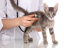 11 point Cat Health Checklist