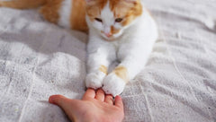 How Dirty Are Your Cat's Paws?