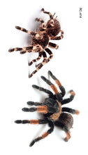 Load image into Gallery viewer, Spider Scorpion For Halloween