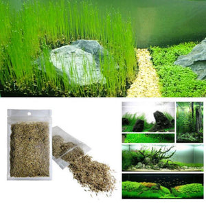 Plant Grass Seeding Aquarium Fish Tank Plants Prospects Grass Landscaping Plant Decoration Planting Drop Shipping #40