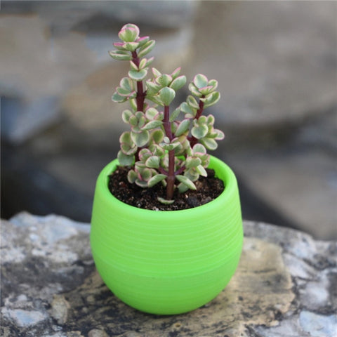 7*7cm Flower Pots Mini Flowerpot Indoor Garden Unbreakable Nursery Pots For Succulent Plants Potted Small Planter Home Decor