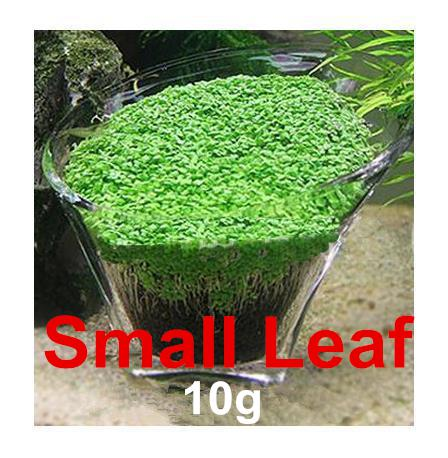 Mini Leaf Aquarium Plant Seed Glossostigma Aquarium Water Plant Grass Decor Easy Grow Seed For Fish Tank Decoration Background