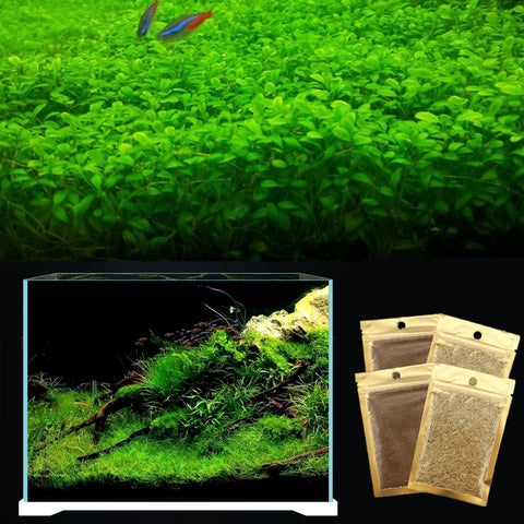 Easy Growing Aquarium Plant Decoration Live Water Grass For Fish Tank Landscape Ornament Glossostigma Hemianthus Callitrichoides