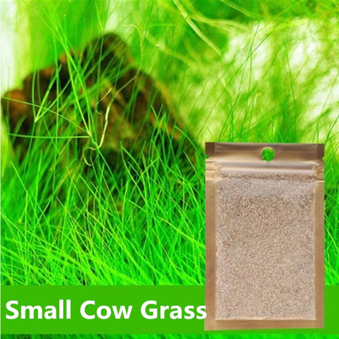 Easy Growing Aquarium Water Plant Seed Hemianthus Callitrichoides Eleocharis Aquatic Grass Lawn Seed for Fish Tank Decoration