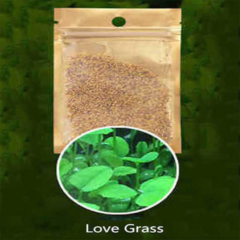 5 Pack Water Plant Seeds Aquarium Seeds Easy Aquatic Live Grow Plant for Garden Lawn Fish Tank Aquarium Decor Foreground