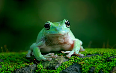 What does WTF stand for? Wrap the frog