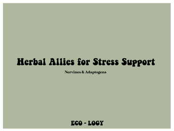 Introduction to Herbal Allies for Stress Support