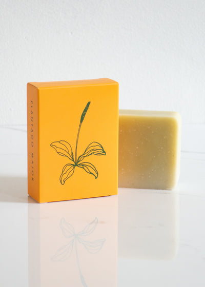 ALTR Plantago Major Soap