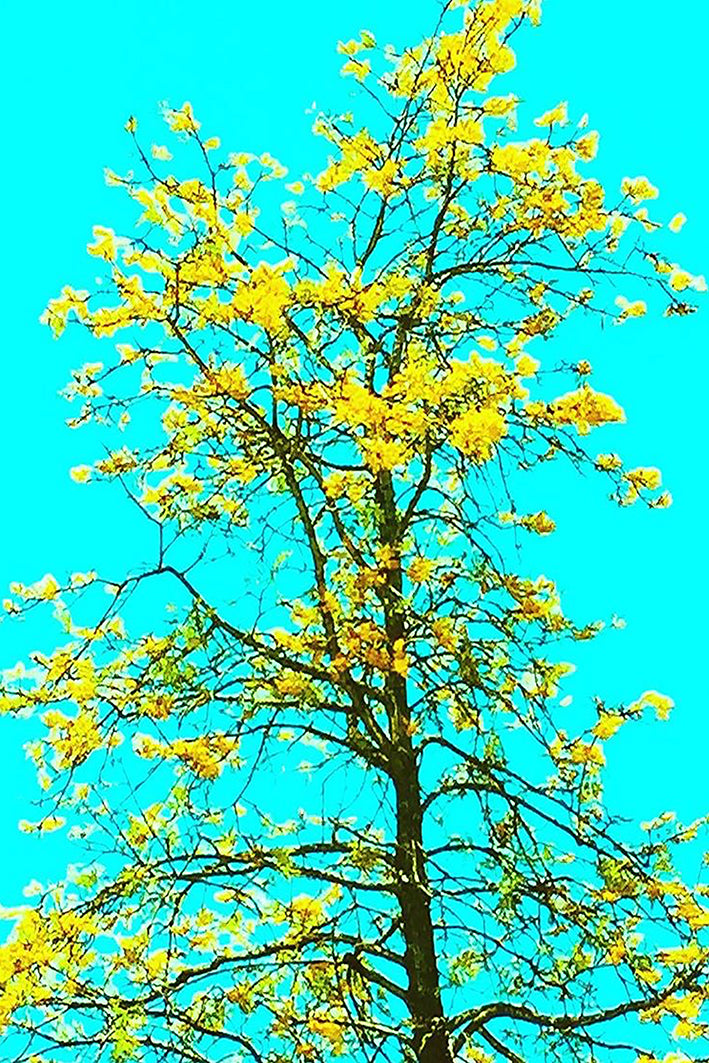 Flowering Tree - Flokk