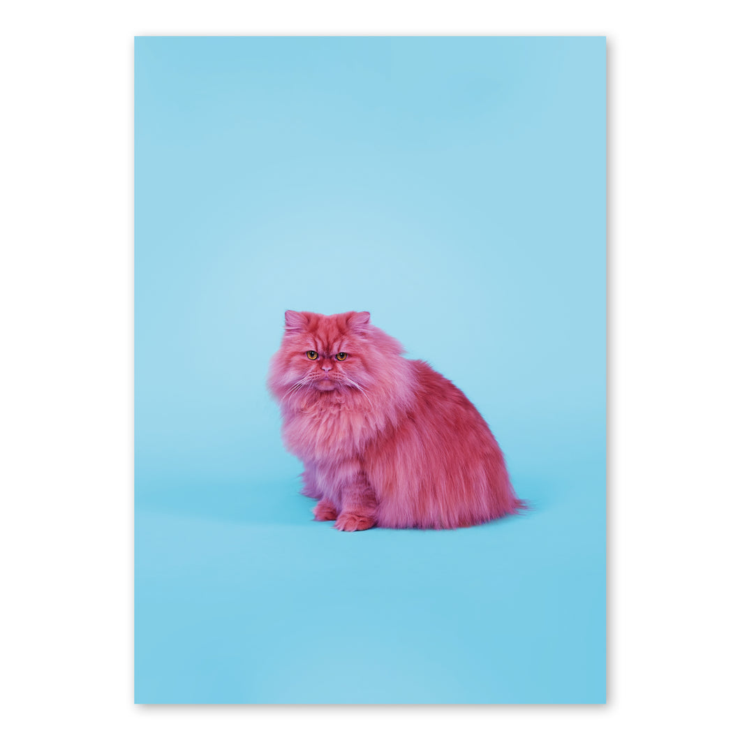 Fineart Print - Frido The Cat