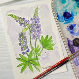 Watercolor Floral painting of Lupine flowers out lined in ink