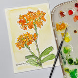 Watercolor Floral painting of Epindendrum flowers out lined in ink
