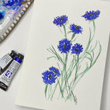 Watercolor Floral painting of Cornflowers out lined in ink