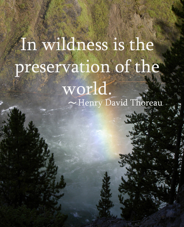 Famous Wildlife Conservation Quotes: Famous Nature Quotes By Thoreau. QuotesGram