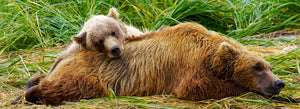 Sow and Cub Resting by Dan Twitchell