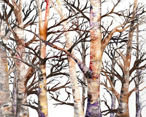 Adams Birch by Rhonda Scott