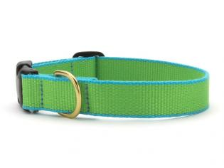 Green Market Lime with Aqua Dog Collar