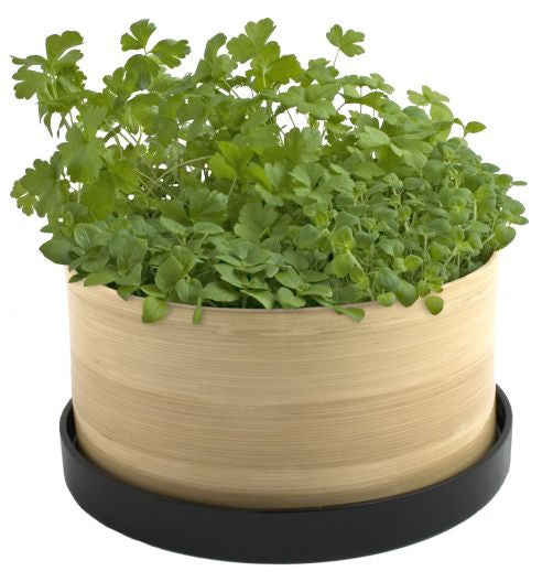 Potting Shed Grow Pot - Culinary Herb Box