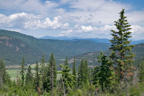Mountain View from National Forest