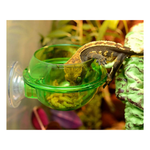 Anti-Escape Suction Cup Feeding Dish