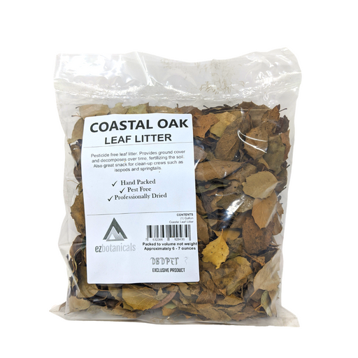 Coastal Oak Leaf Litter