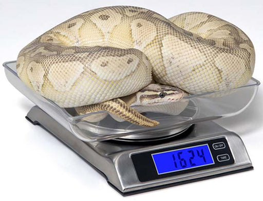 DS6000 Digital Reptile Scale