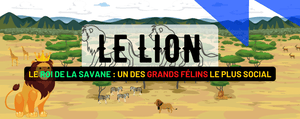 Le Lion, Roi de la Savane : Description, Habitat, Alimentation et Reproduction