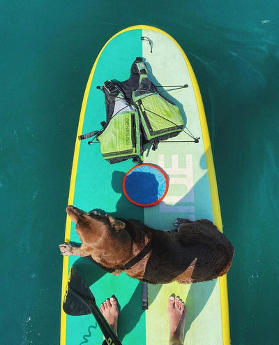 Introducing Your Dog To Paddle Boarding
