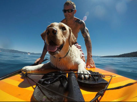 dog on a paddle board
