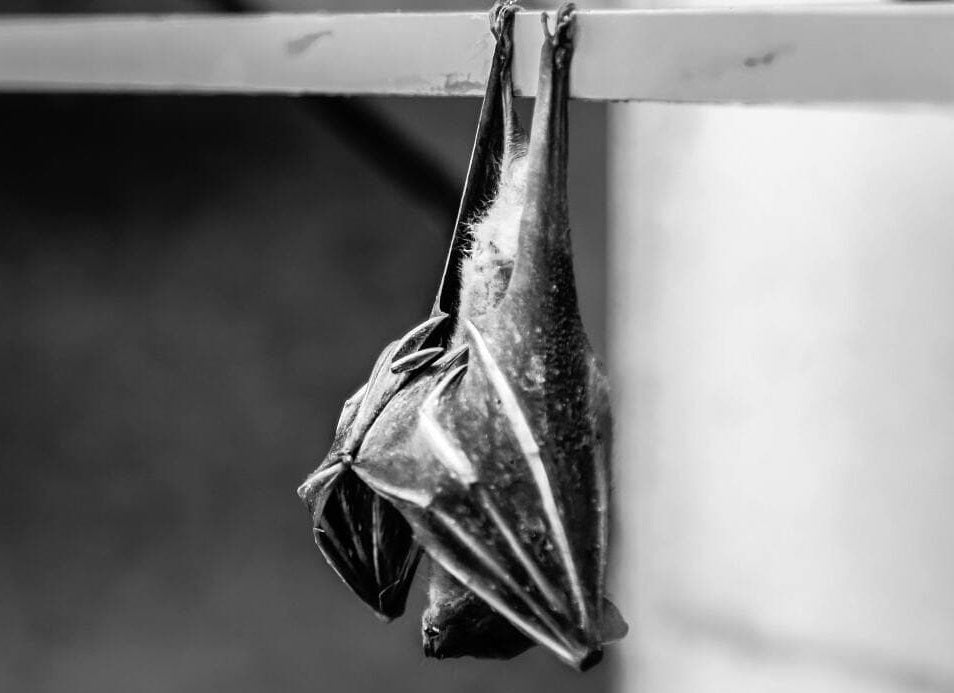 Bat Meaning & Symbolism | Bat Spirit, Bat Totem & Dreams | Brooch Paradise