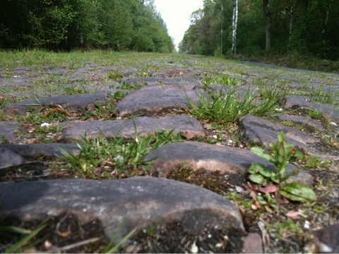 Stones at the entry to the Arenberg Forest Sector - 2008 Testing