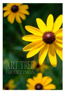 Black Eyed Susan: Paper Photo Card - Blank