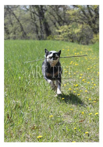Dog with Stick: Cute Paper Photo Greeting Card
