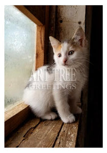 Kitten: Printed Blank Photo Card