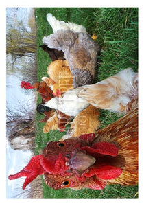 Chicken Looking Into Camera | Cute Birthday Card