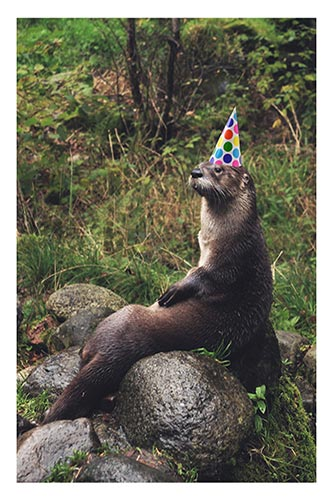 Otter in birthday hat
