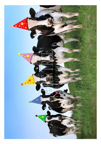Cows in Party Hats | Funny Birthday Card
