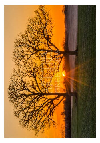 Sunset Through Trees | Blank Photo Card
