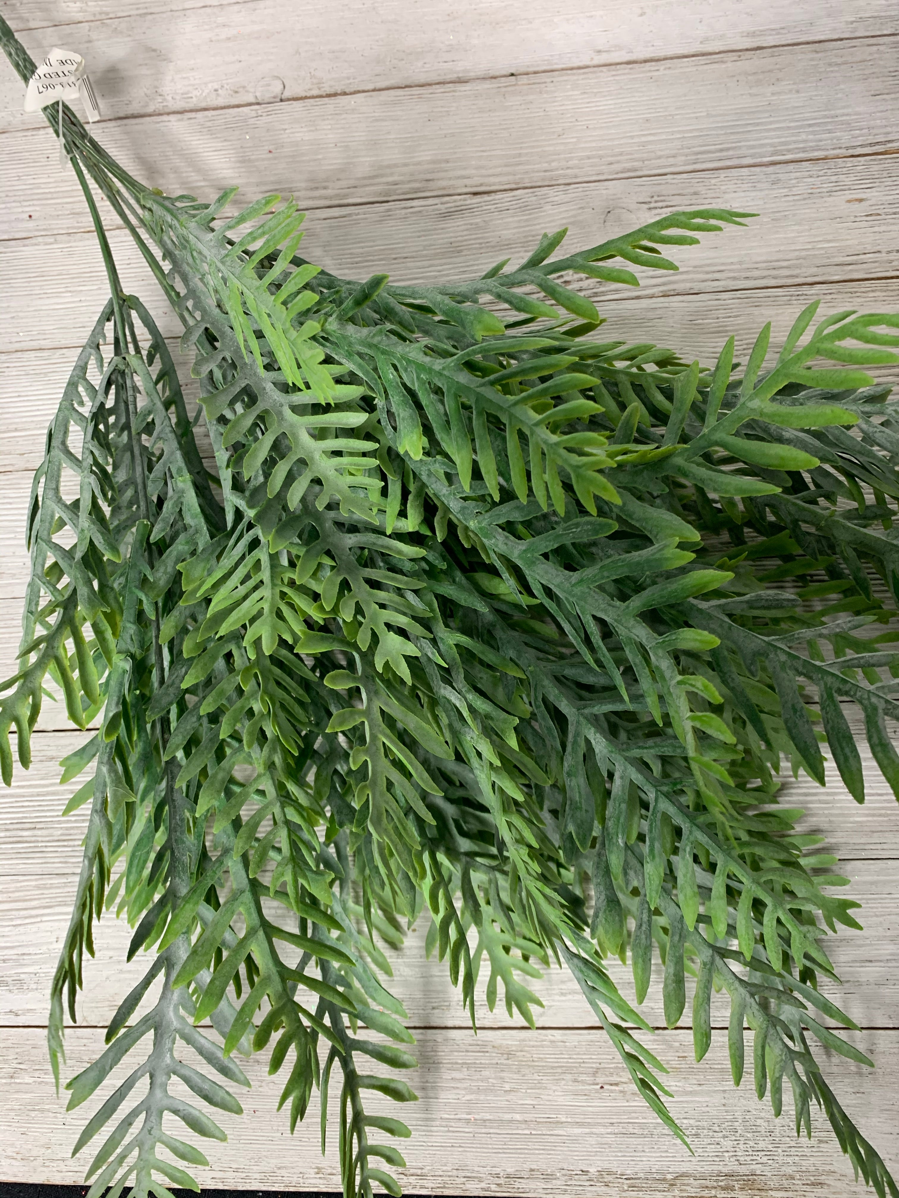 Palm leaf fern