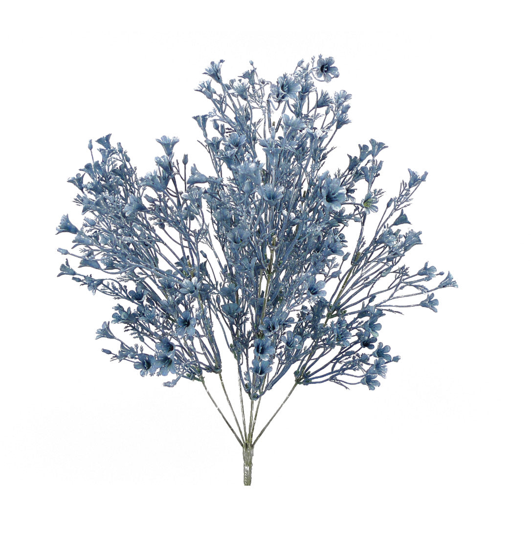 Wax flower bush - dusty blue