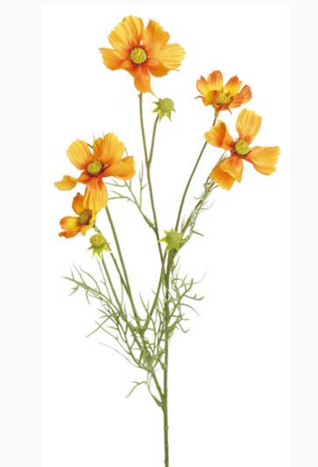 cosmos spray, orange filler flowers - Greenery Market