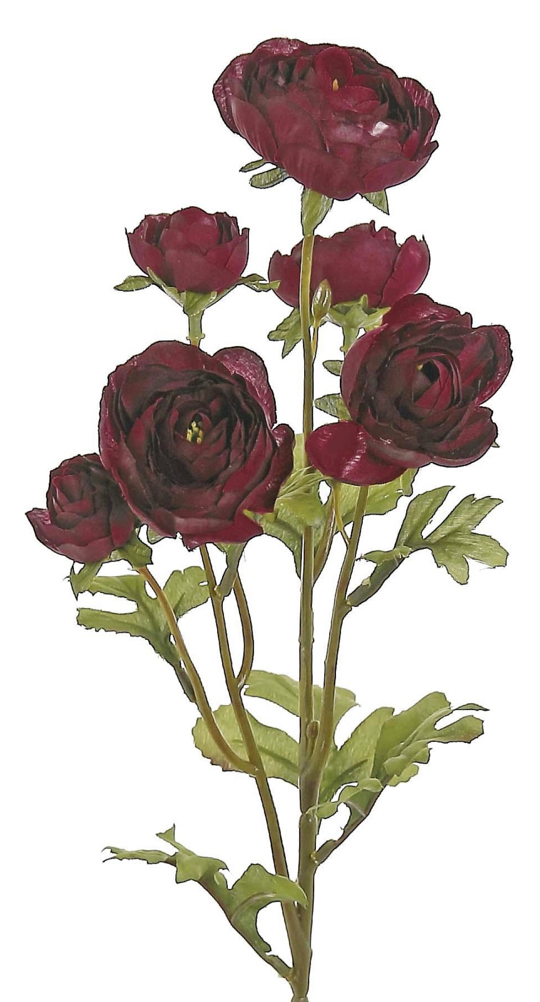 Ranunculus cluster spray - red / burgundy - Greenery Market