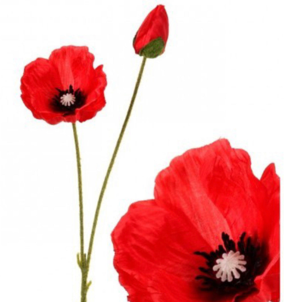 Red poppy spray