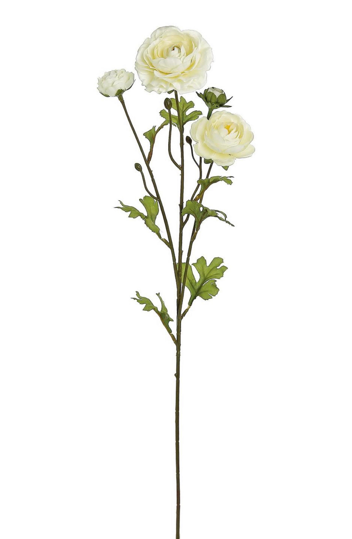 Ranunculus spray - cream