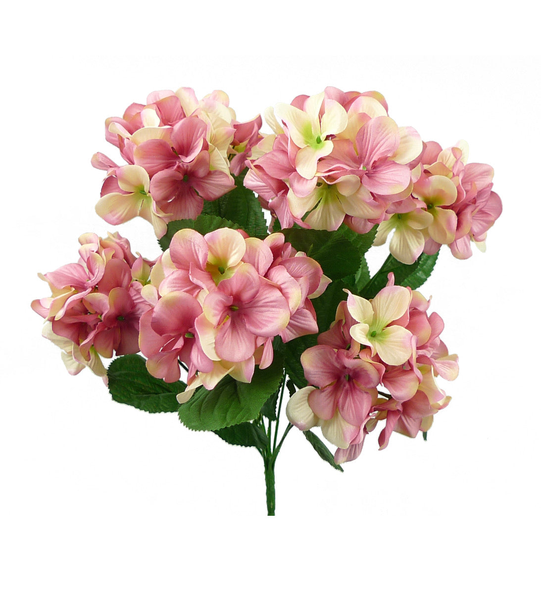 Hydrangea - pink mauve and cream